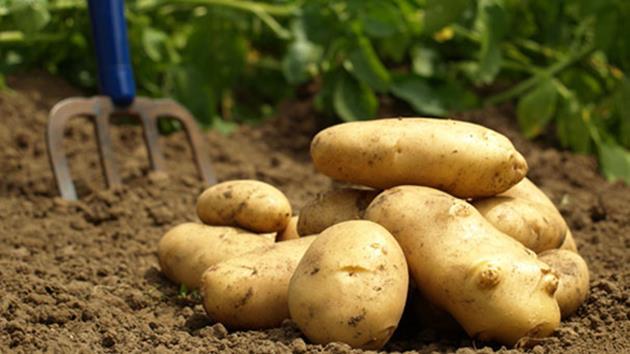 1.70 TL'lik patates, pazarda neden 5 TL!