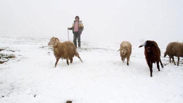 Aniden bastıran kar Ağrı'yı beyaza bürüdü!