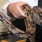 Bir yılan 3 yıl uyuyabilir.