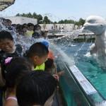 """Bir beyaz balina """"Hakkejima Deniz Cenneti"""" akvaryumunda, izleyenlerin üzerine su püskürtüyor. Fotoğrafçı: TOSHIFUMI KITAMURA Yer: Tokyo / Japonya Tarih: 20 Temmuz 2015"""