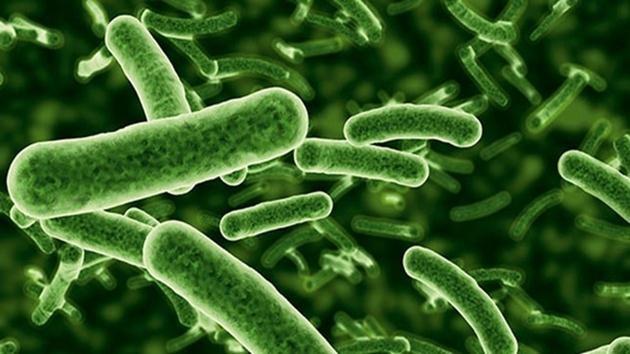 bakteri-zararlı