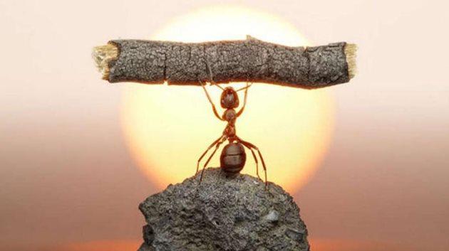 Dünyayı istila edebilen karınca türü!