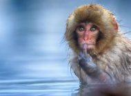 En Komik Vahşi Yaşam Fotoğrafları!